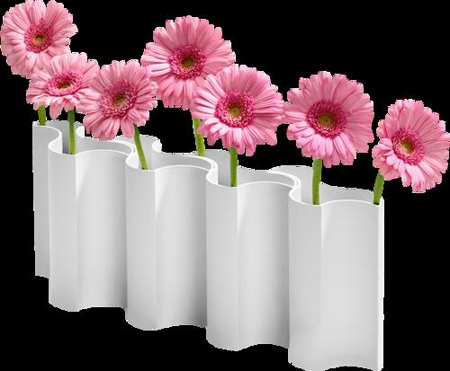 fleurs chrysanthèmes photos