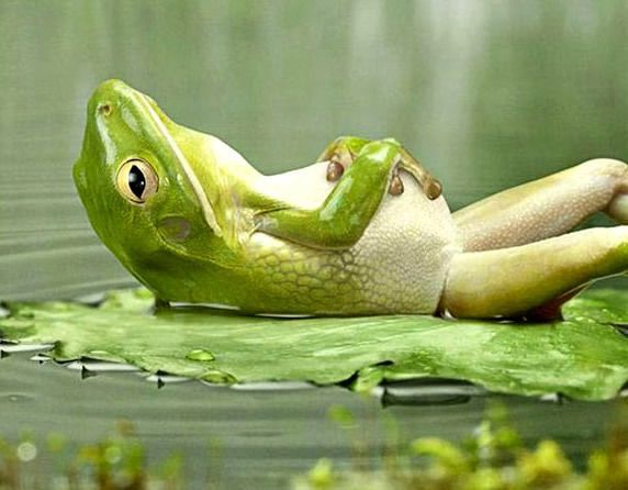 relaxation grenouille